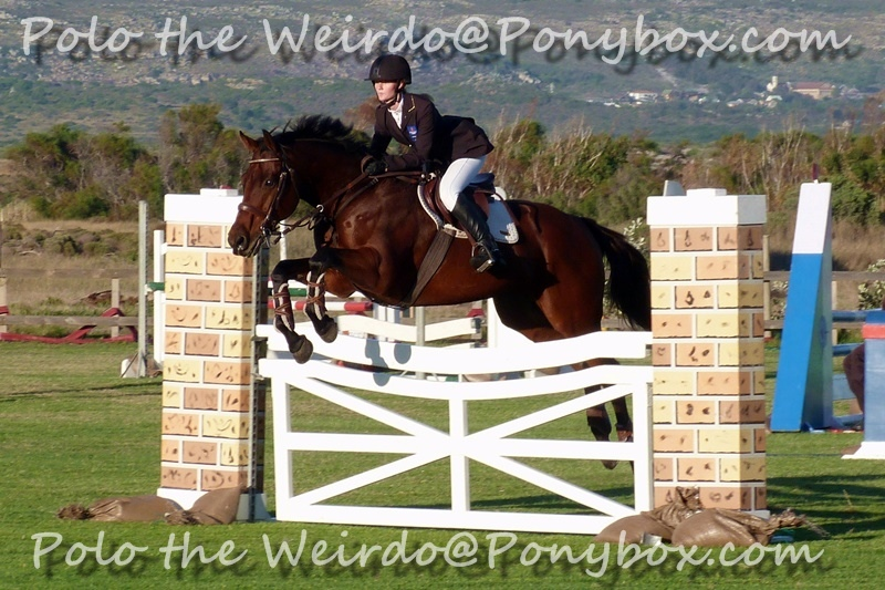 The Showjumpers Diary