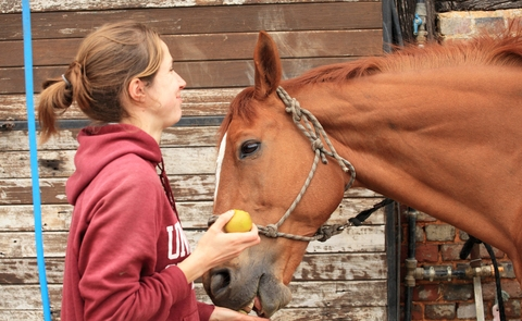 Safe Treats for Your Horse