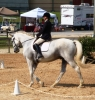 Choosing the Right Type of Dressage Competition