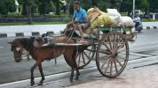 Paraguay Bans Work Horses in City Streets After Outcry From Animal Rights Groups