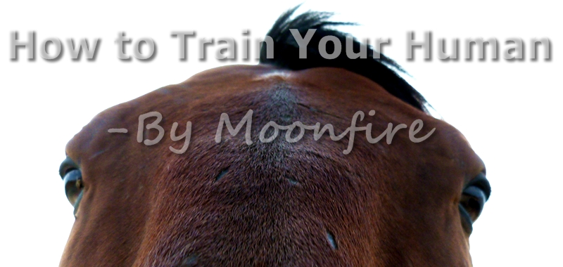 A Horses Guide on How to Train Your Human
