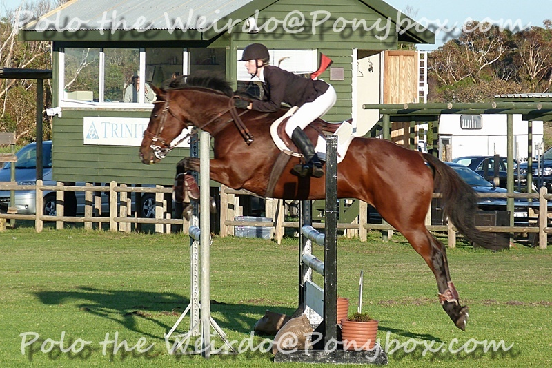 Bronze Showjumping Competition