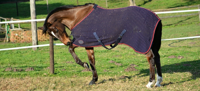 Horse Blanket Measuring Tricks For a Perfect Fit