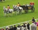 A Royal Obsession - All the Queen's Horses