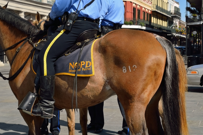 Should Police Horses Be Banned