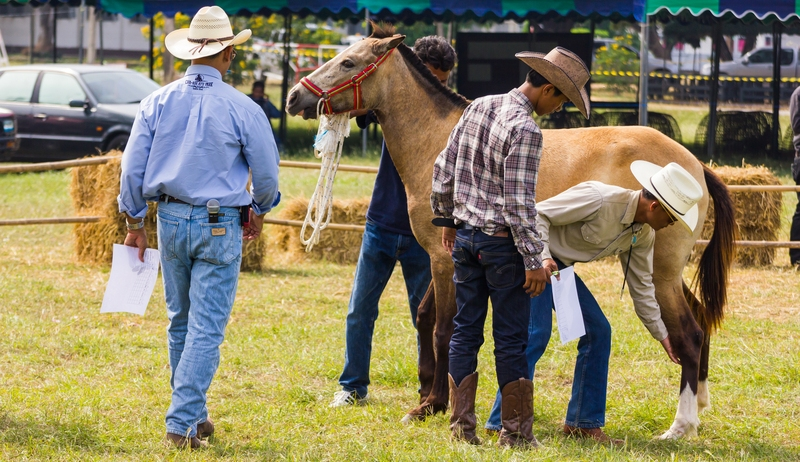 Horse in Texas Team Roping Competition Tested Positive for Rabies