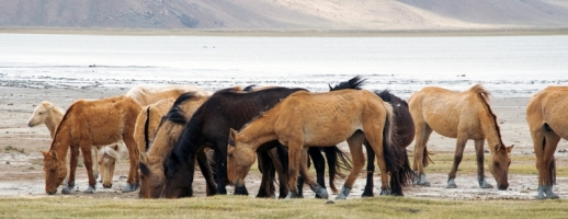 How Horse Breeds Developed