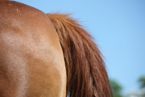 Five Reasons Your Horse is Rubbing its Tail