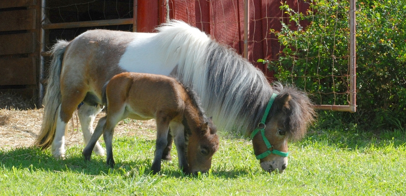 Backyard Breeders Blamed For Spike In Equine Population