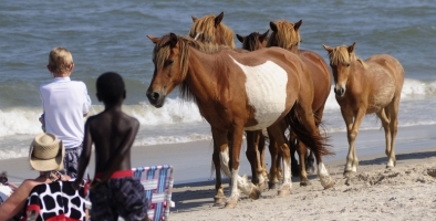 Three Places to Adopt Wild Horses