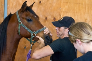 Fall Equine Virus and Disease Concerns
