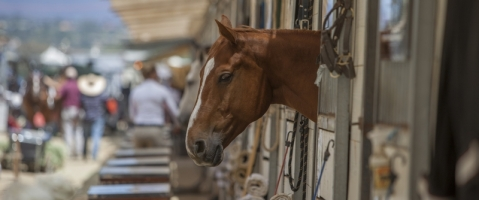 Major Horse Stall Hazards That Kill