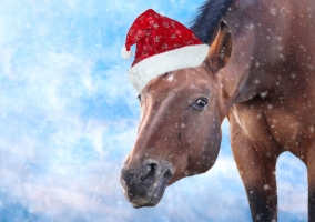 A Horse Lovers Letter to Santa