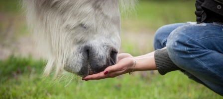 Dangers of Monensin Antibiotics in Horse Feed
