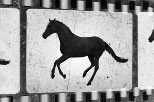 Free Horse Movies and Documentaries Online