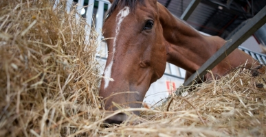 Avoiding Feed Mill Horse Feed Poisoning