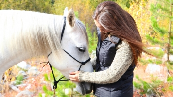Caring for a Senior Horse