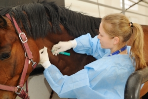 Horse Vaccines Are Not Necessary