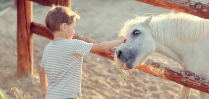 Just Buy Your Kid a Pony