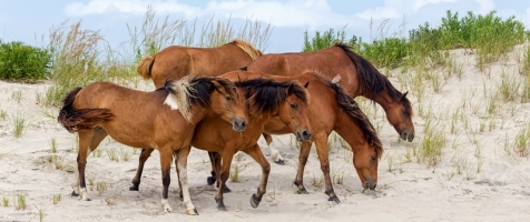 What is the Difference Between Domestic and Wild Horses