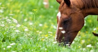 Ten Gifts Spring Brings to Horse Owners