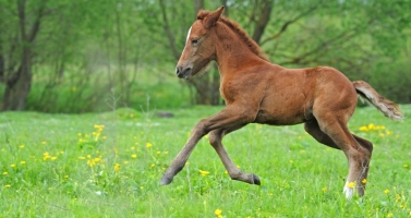 Horse Breeding Terms Tutorial