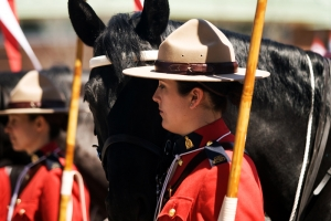 Le Cheval Canadien - An Endangered Breed