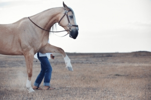 Three Things Your Horse Can Do But You Cant