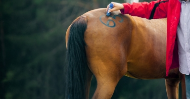 Not Knowing Your Horses TPR Could Be Deadly