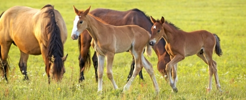 What Age to Start a Horse Under Saddle
