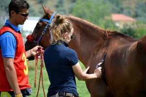 Volunteering at Equine Events