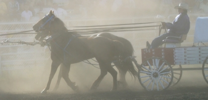Four Horses Killed in 2015 Chuckwagon Races