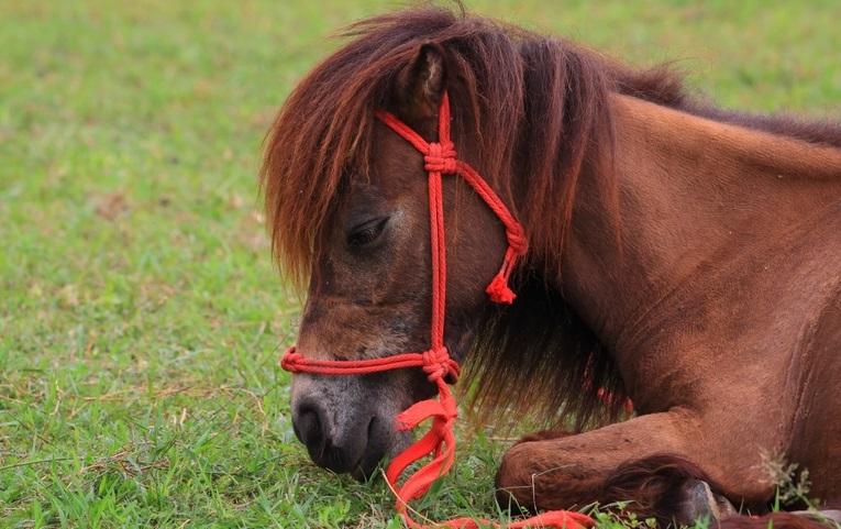 Midget horses mating   XXX Porn Library