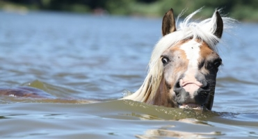 Swimming With Horses [Video]