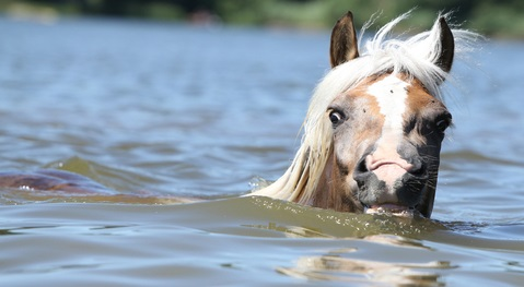 The Flood Horses of South Carolina