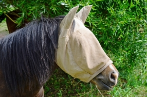 How Your Horse Protects Itself From Flies