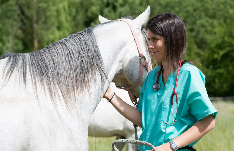 Diseases Humans Catch From Horses