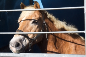 Solving the Problem of Unwanted Horses