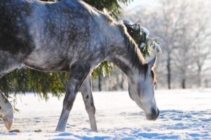 Winter Equine Weight Loss