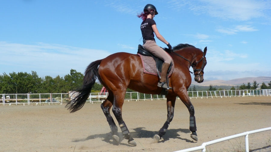 Canter Transitions