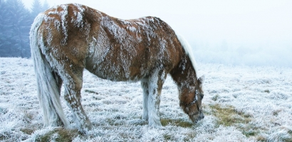 Horses May Prefer Cold Pasture Over Warm Shelter