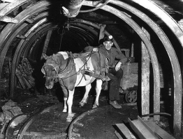 Going to Work in the Dark - The Story of the Pit Pony