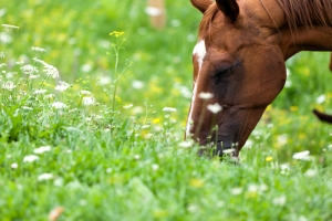 7 Point Plan for Spring Horse Care