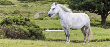 Caring for the Outdoor Horse