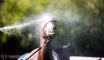 Heat Drought and Horses