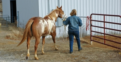 What You Need to Know Before Giving Your Horse Away