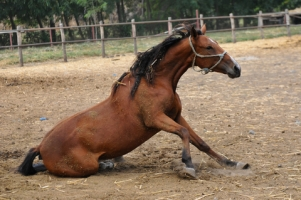Types of Equine Medical Shock Emergencies