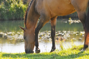 How to Lead a Horse to Water and Drink