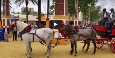 Traditional Horse Festivals