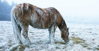 Cold Weather Horses
